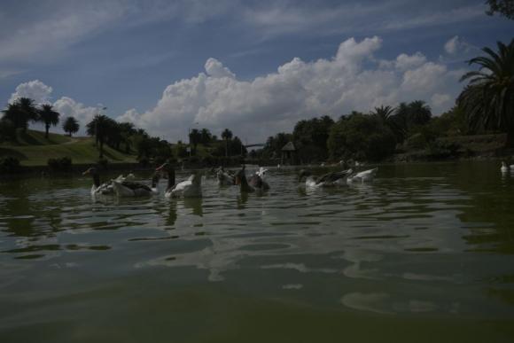 """En el lago del Parque Rodó conocido como """"Cachón"""" funciona bien la cascada, pero la IMM reconoce que debe mejorar su mantenimiento. Foto: F. Ponzetto"""