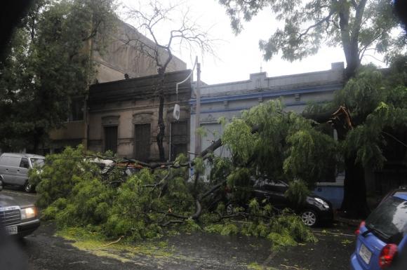 Destrozos por el temporal. Foto: Ariel Colmegna