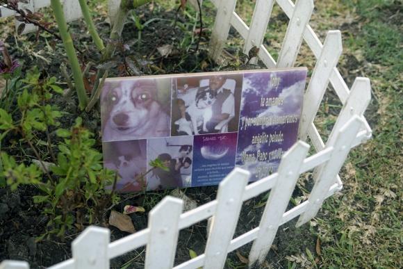 Cementerios: además de perros y gatos hay tortugas, hamsters, patos y ovejas enterradas. Foto: Fernando Ponzetto