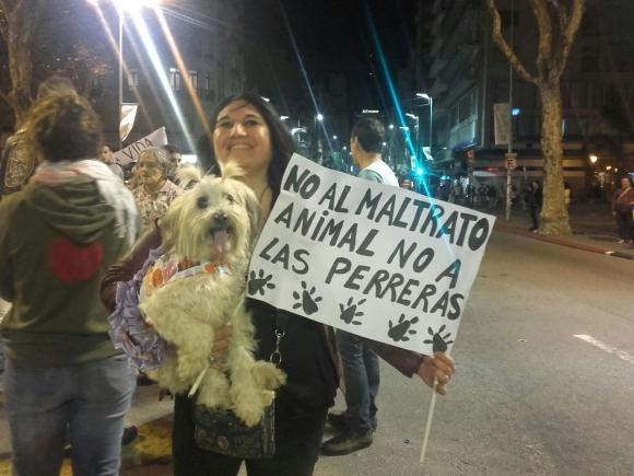 Colectivos de protección animal se pronunciaron en contra de las perreras. Foto: Darwin Borrelli