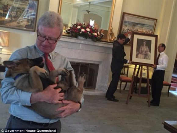 Gavel fue nombrado perro-oficial vice real. Foto: Government House Queensland