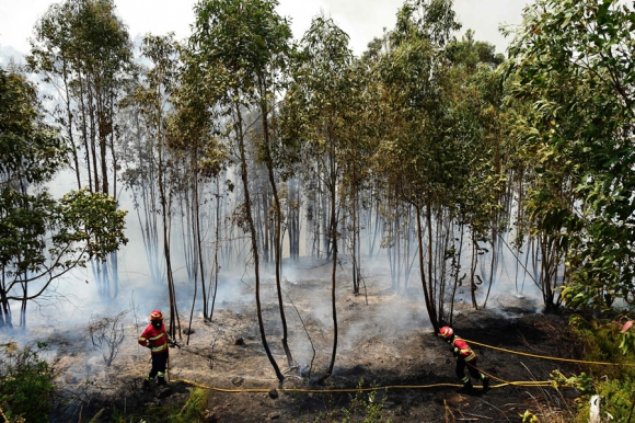 Incendios en Portugal. Foto: AFP