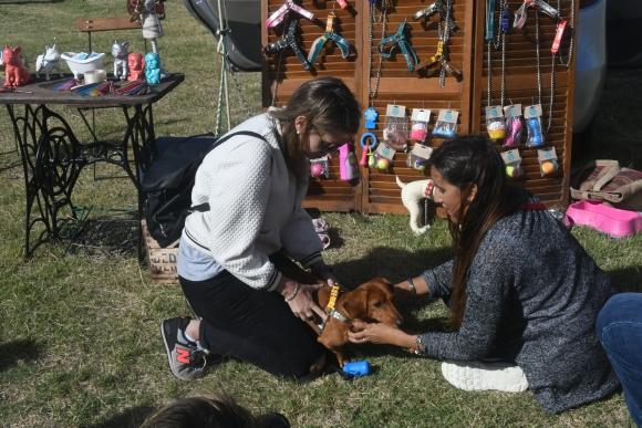El segundo Encuentro de perros salchicha se celebró en el Faro de Punta Carretas. FOTO: Francisco Flores