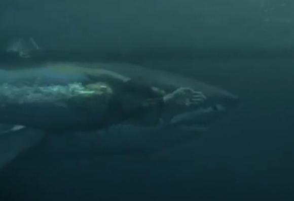 Michael Phelps contra un tiburón. Captura