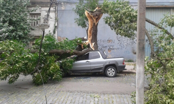 Varios árboles cayeron en Montevideo por el temporal. Foto: @miguechagas