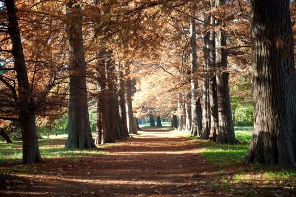 Avenida de los Cipreses Calvos, Jardín Botánico. Año 2011. Foto: Centro de Fotografía