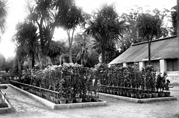 Montevideo Natural. Parque del Prado, año 1919. Foto: Centro de Fotografía