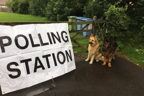 Los perros también van a votar en Reino Unido. Foto: @sonnyjim50 / Twitter.