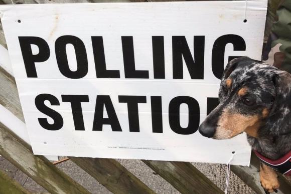 Los perros también van a votar en Reino Unido. Foto: @Riksbird4ever / Twitter.