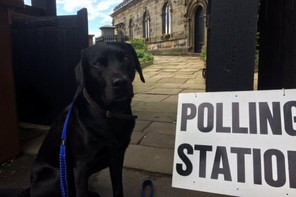 Los perros también van a votar en Reino Unido. Foto: @RebeccaMoncrief / Twitter.