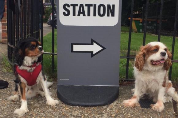 Los perros también van a votar en Reino Unido. Foto: @missdmm98 / Twitter.