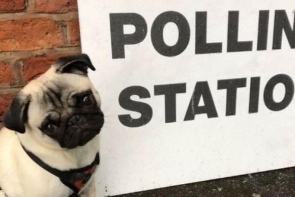 Los perros también van a votar en Reino Unido. Foto: @RareDevs / Twitter.