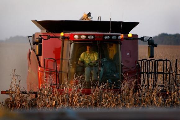 Maíz: las buenas condiciones favorecieron en julio a los cultivos. Foto: AFP