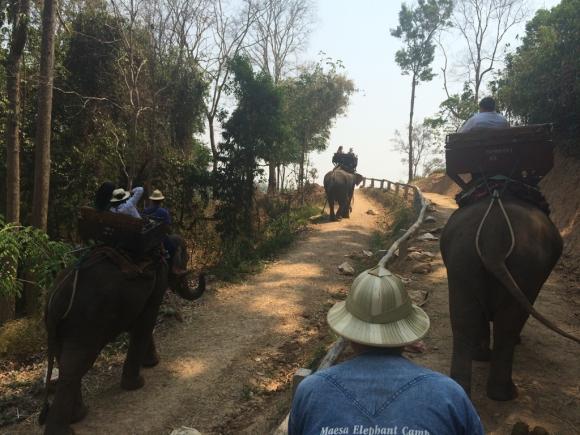 Maesa, el campo de elefantes más grande del Norte de Tailandia. Foto: Déborah Friedmann