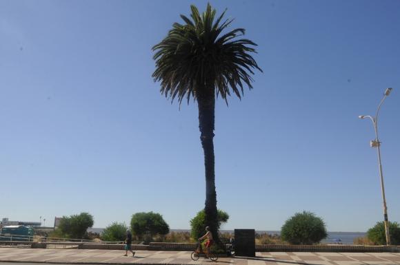 En 1968 Juana de Ibarbourou estuvo en la inauguración de la placa en su palmera. Foto: A. Colmegna