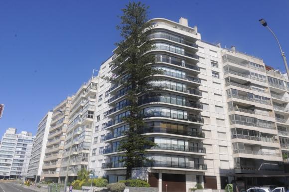 Pino de la Rambla de Montevideo y Martí, que por contrato, debió mantenerse al lado del edificio. Foto: A. Colmegna