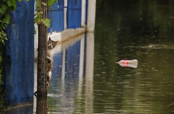 Los animales se desorientan con la creciente. Foto: Fernando Ponzetto.