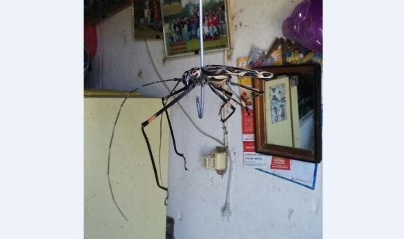 Un insecto de 30 cm apareció en Melo. Foto: Néstor Araújo