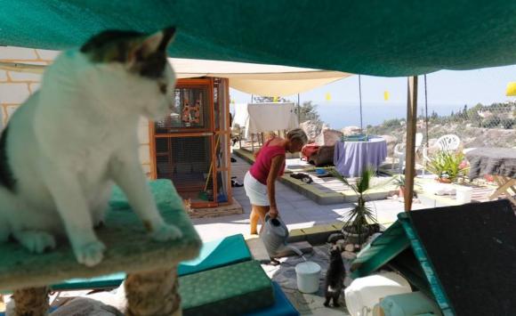 Chipre, un país con superpoblación de gatos. Foto: AFP.