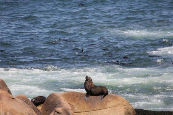 Cabo Polonio es uno de los destinos turísticos preferidos de Uruguay. Foto: Juan Gari