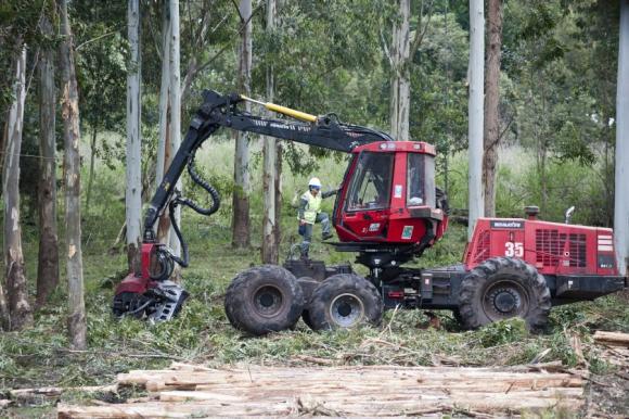 Mujeres que trabajan en la industria forestal. Foto: Fernando Ponzetto