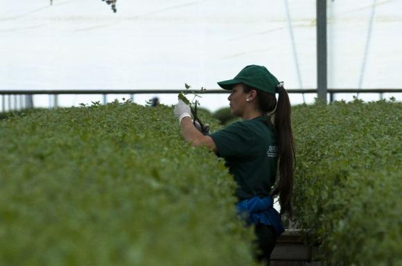 Mujeres que trabajan en la industria forestal en Uruguay. Foto: Fernando Ponzetto