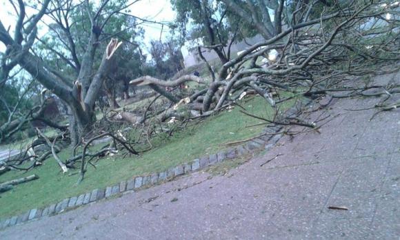Árboles caídos en Pirápolis. Foto: @IvanTutoriales5