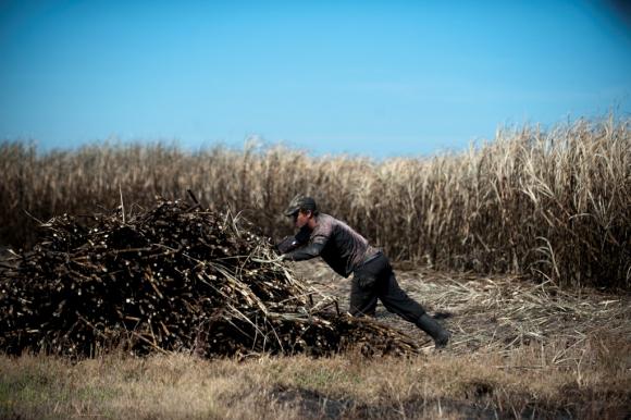 Cañero durante el cultivo. Foto: Fernando Ponzetto