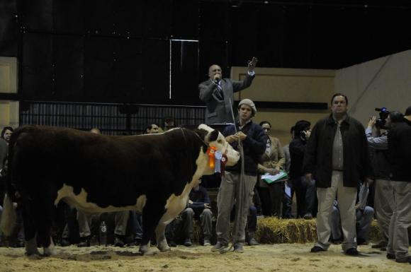 En Hereford, el máximo valor lo hizo Dutra con un toro de Zaina. Foto: A. Colmegna