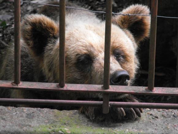 Eva nació hace 19 años en el zoológico de Salto. Foto: archivo El País