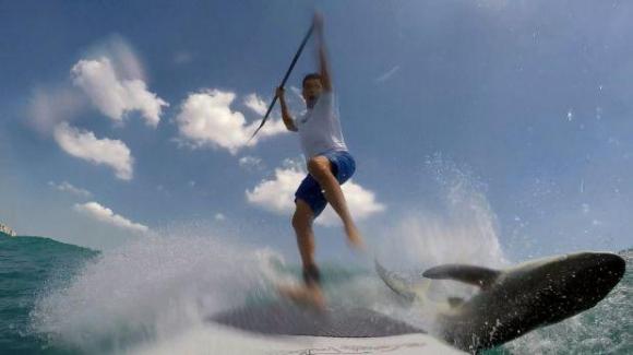 Un tiburón chocó con un surfista y es viral en las redes sociales. Foto: Captura de pantalla