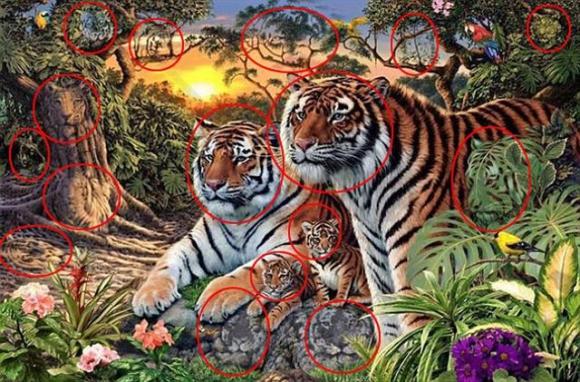 Los tigres en total son 16. Foto:Daily Mail