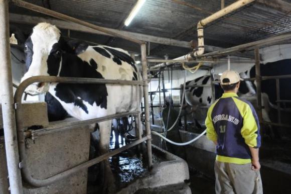 La lechería pierde área y debe mejorar la producción: productores buscan innovar. Inés Guimaraens