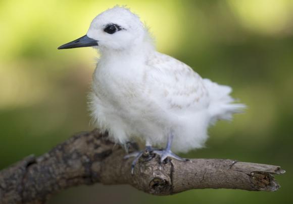 reserva natural en Hawái. Foto: Reuters