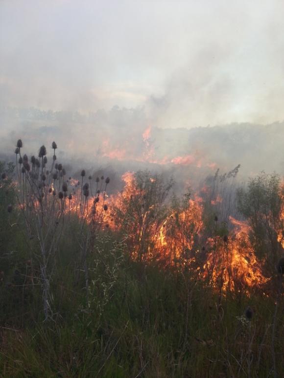 Bomberos asistiendo fuego próximo a Comcar. Foto: E. Barreneche