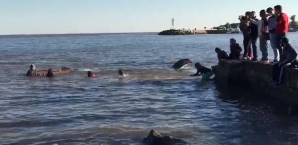 La ballena llamó la atención de varias personas. Foto: @robhernandez3