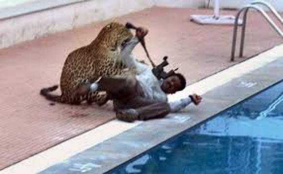 El leopardo ataca a un funcionario. Foto: captura de video Euronews