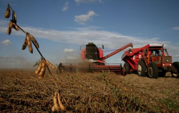 La oleaginosa es el motor de crecimiento del sector agropecuario. Foto: Archivo El País.