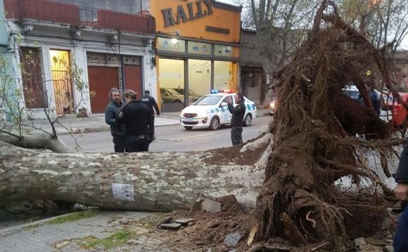 Árbol caído en San Martín y Bulevar. Foto: @carfervalen
