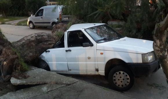 Árbol cayó sobre auto en Pedro Cosio casi Av. Italia. Foto: @LVilaGonzalez