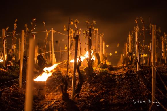 Viñedo de Chablis. Foto: Aurélien Ibanez