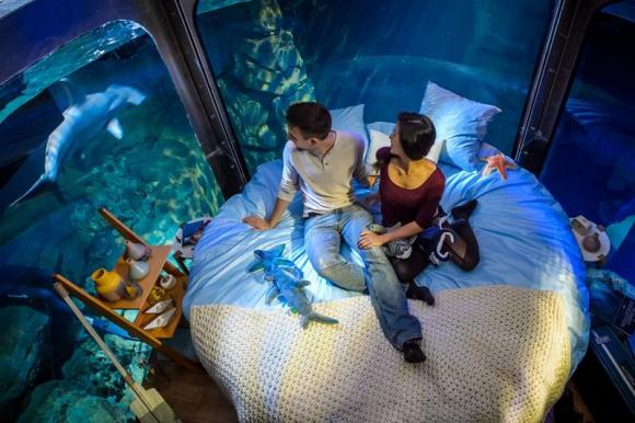 Tres parejas dormirán y comerán entre tiburones. Foto: EFE