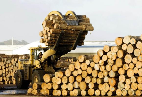 La forestación fue el rubro que más creció por la exportación y celulosa.