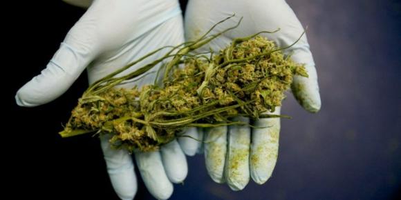 En Israel hay ocho empresas que producen marihuana para usos en el sistema de salud.