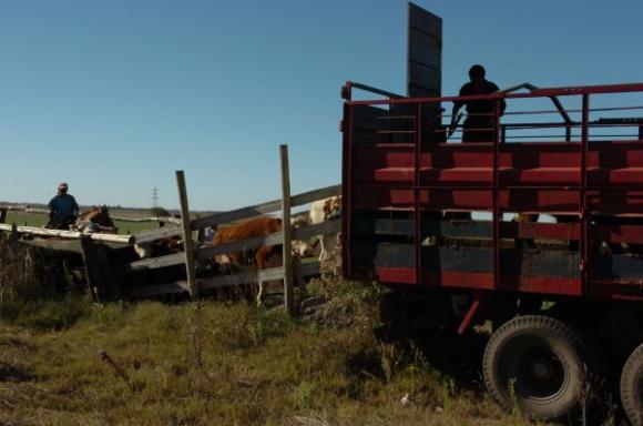 Federación Rural dice que 1% de diferencia en el dressing significa US$ 20: al año. Foto: Ariel Colmegna.