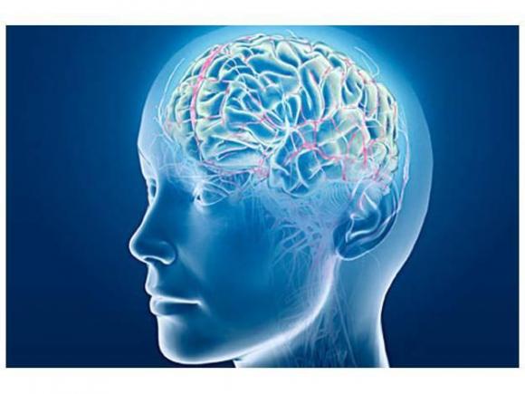 Ilustración cerebro