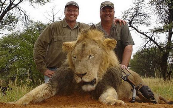 Mató un león y se ganó el odio mundial. Foto: Captura