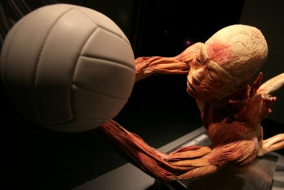 Las muestras con cadáveres humanos son muy controvertidas.
