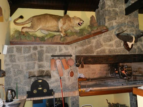 El taxidermista Daniel Cóppola continúa dando forma o reconstruyendo varias piezas de animales.
