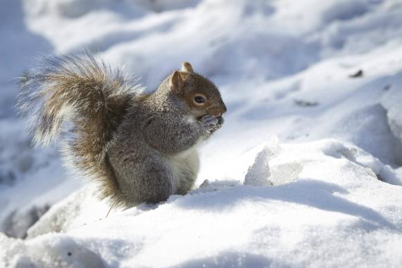 Ardilla en el Central Park. Foto: Reuters.